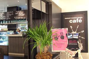 灰狗咖啡廳 曼谷潮牌 咖啡廳 灰狗咖啡廳 Chit Lom Greyhound Café Chit Lom