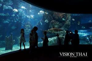 Sealife Bangkok  Sealife Bangkok Ocean World 企鵝 海洋世界