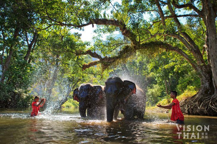 大象是充滿靈性的動物,值得被人類好好對待(示意圖來源VISION THAI 看見泰國)