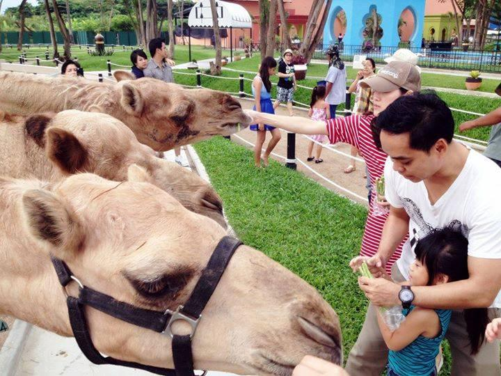 华欣七岩骆驼主题公园(图片来源:Camel Republic官方脸书粉专)
